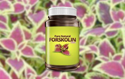 Forskolin Slim – the Coleus Forskohlii Plant extract available online