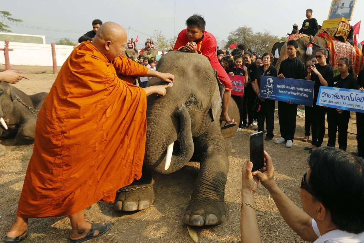 Giorno nazionale dell'elefante in Thailandia