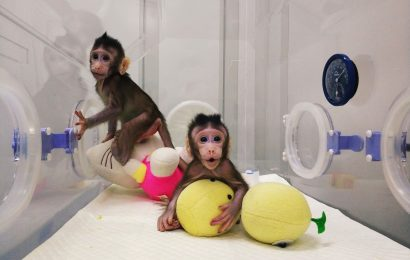 China Has Successfully Cloned Monkeys – Are we next?