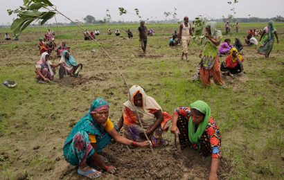 India Plants 66 Million Trees in 12 Hours – New Record to Meet Paris Agreement