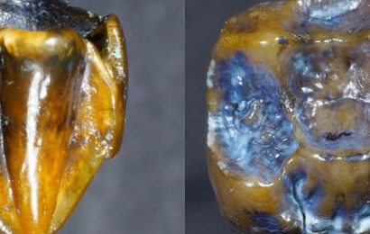 Fossilized Teeth Dating Back 9.7 Million Years Discovered