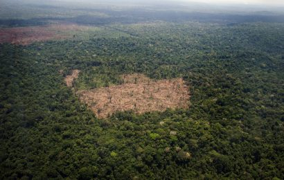 Deforestation of the Brazilian Amazon Has Reached New Records